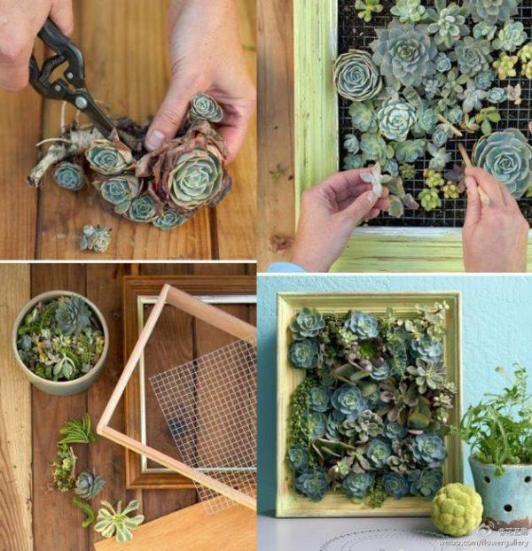 Trae un pedacito de desierto a tu casa - Cuadro jardin vertical ...